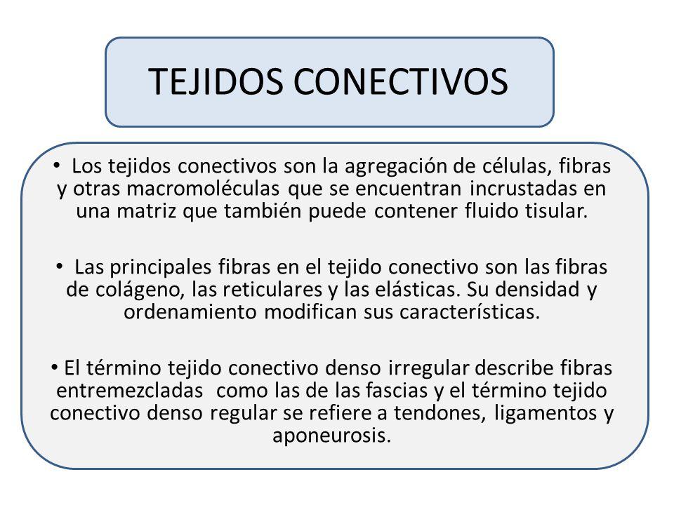 TEJIDOS CONECTIVOS