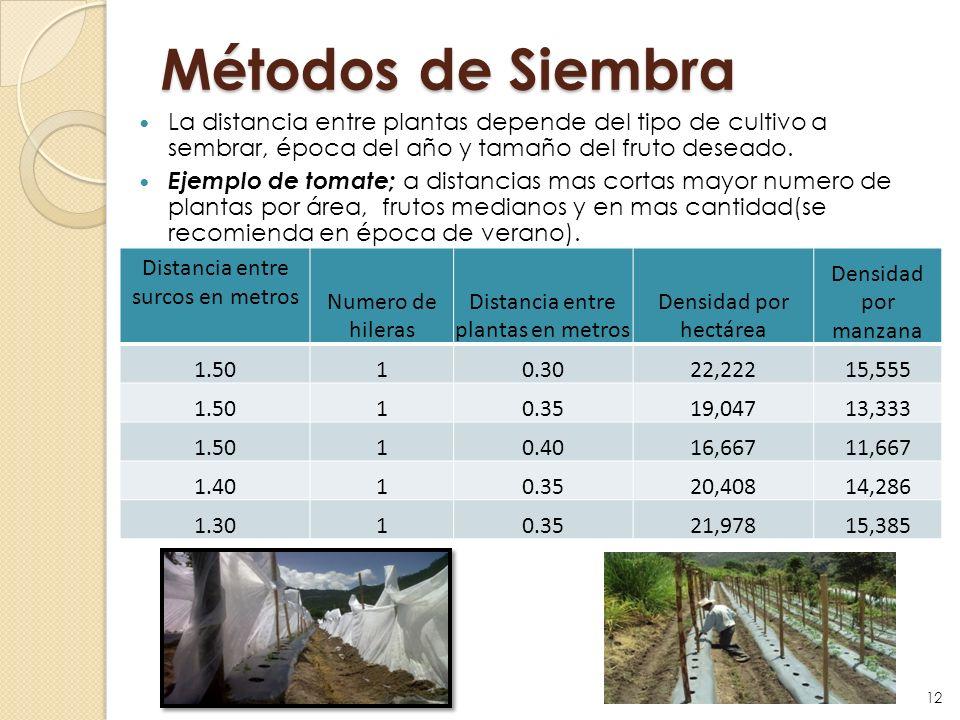 Métodos de SiembraLa distancia entre plantas depende del tipo de cultivo a sembrar, época del año y tamaño del fruto deseado.