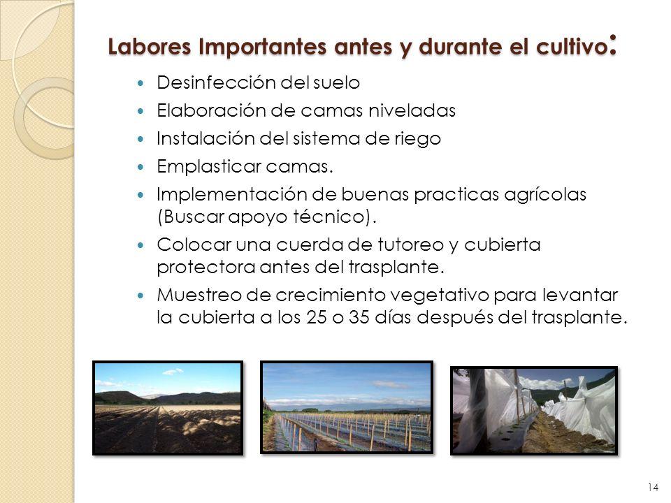 Labores Importantes antes y durante el cultivo: