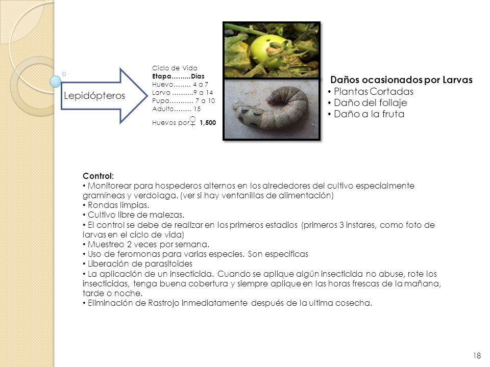 Daños ocasionados por Larvas Plantas Cortadas Daño del follaje
