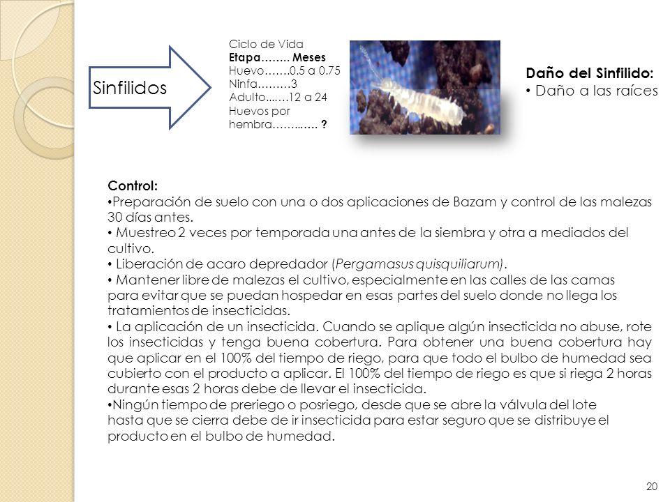 Sinfilidos Daño del Sinfilido: Daño a las raíces Control: