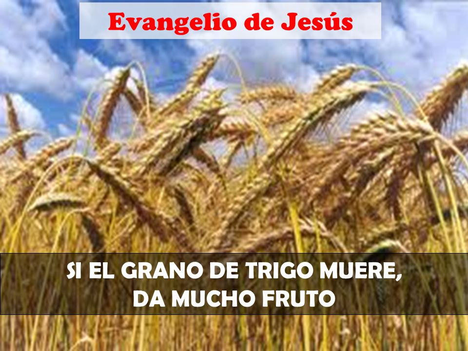 SI EL GRANO DE TRIGO MUERE,