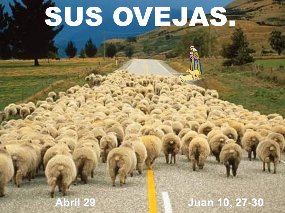 SUS OVEJAS. Abril 29 Juan 10, 27-30
