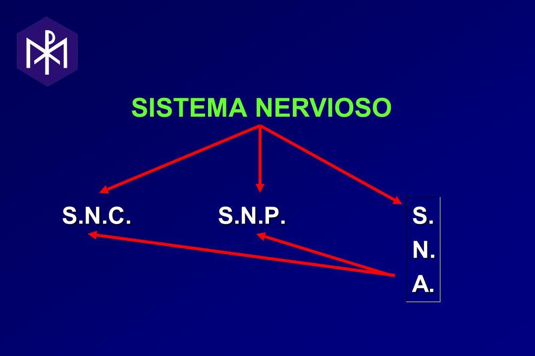 SISTEMA NERVIOSO S.N.C. S.N.P. S. N. A.