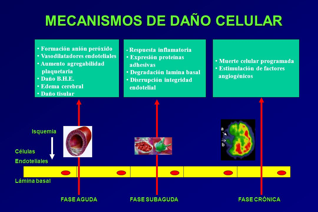 MECANISMOS DE DAÑO CELULAR