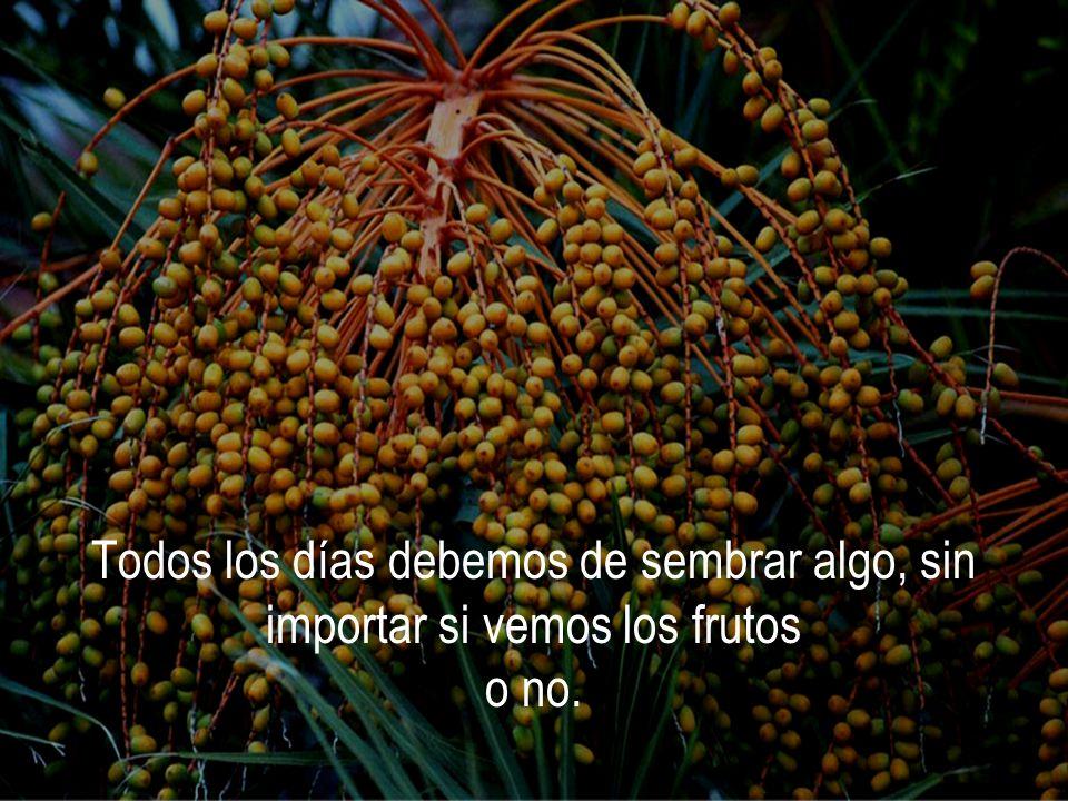 Todos los días debemos de sembrar algo, sin importar si vemos los frutos o no.