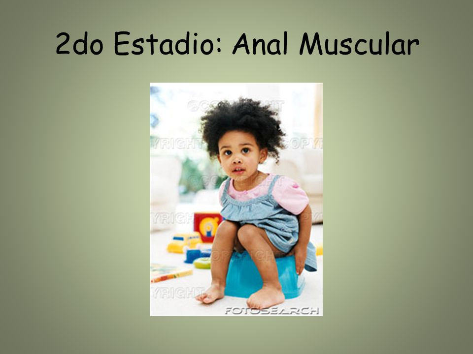 2do Estadio: Anal Muscular
