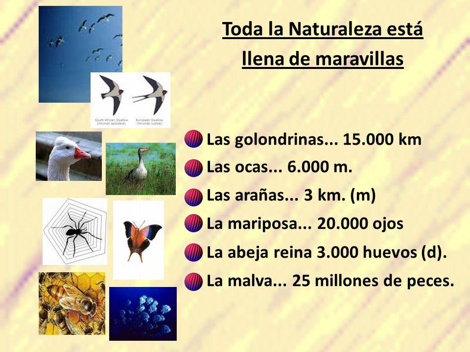 Toda la Naturaleza está