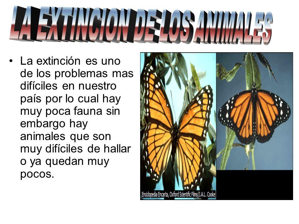 LA EXTINCION DE LOS ANIMALES