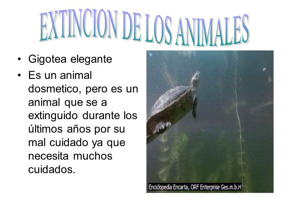 EXTINCION DE LOS ANIMALES