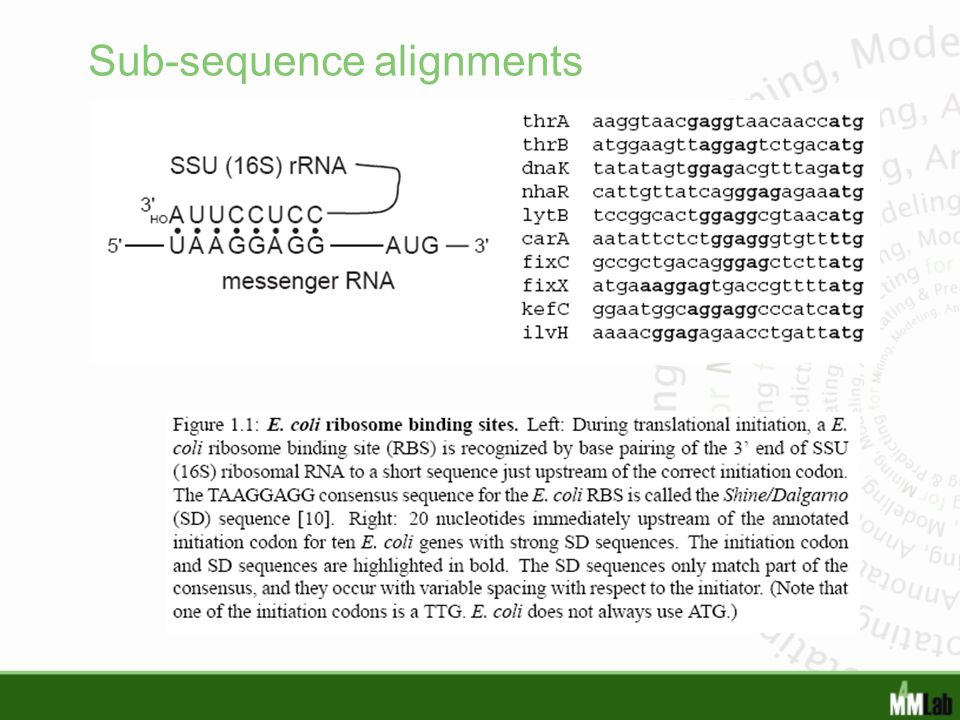 Sub-sequence alignments