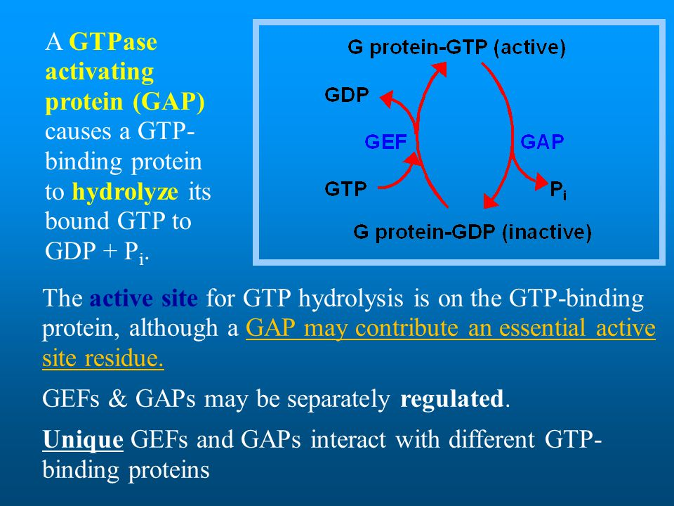A GTPase activating protein (GAP) causes a GTP-binding protein to hydrolyze its bound GTP to GDP + Pi.