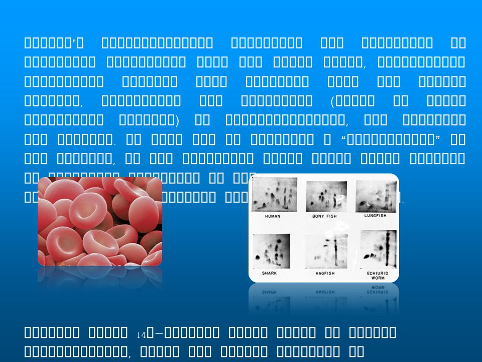 Ingram's fingerprinting technique was performed by purifying hemoglobin from red blood cells, fragmenting hemoglobin protein into peptides with the enzyme trypsin, separating the fragments (based on their respective charges) by electrophoresis, and staining his results. In this way he produced a fingerprint of the protein, as the different amino acids would migrate to different locations on the