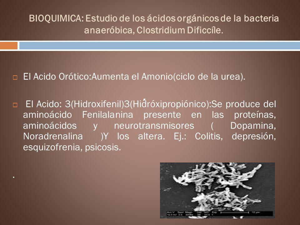 El Acido Orótico:Aumenta el Amonio(ciclo de la urea).