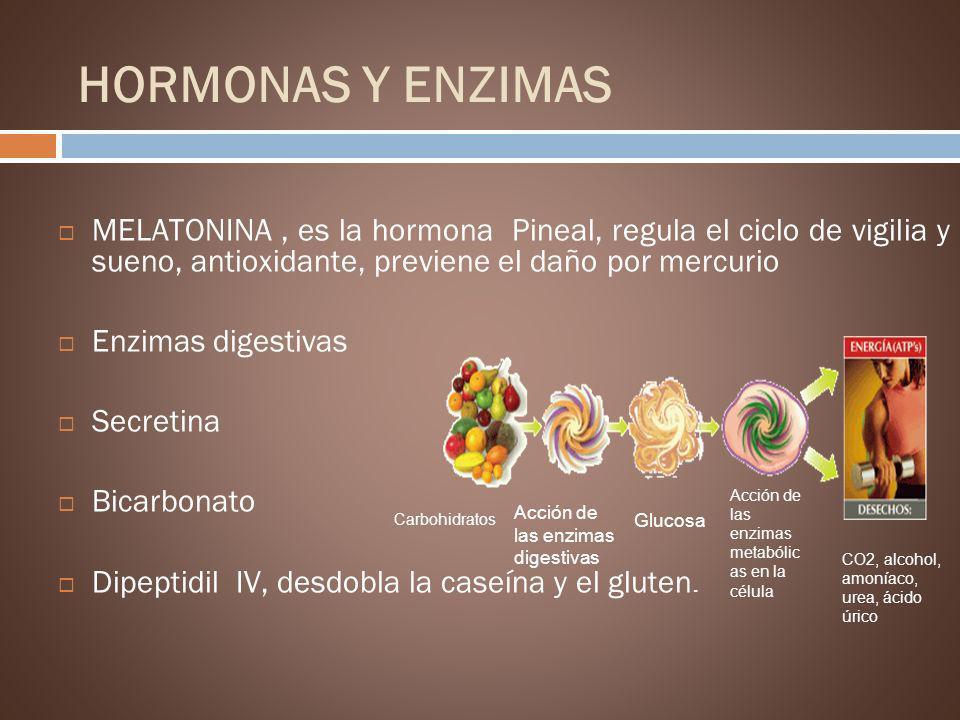 HORMONAS Y ENZIMAS MELATONINA , es la hormona Pineal, regula el ciclo de vigilia y sueno, antioxidante, previene el daño por mercurio.