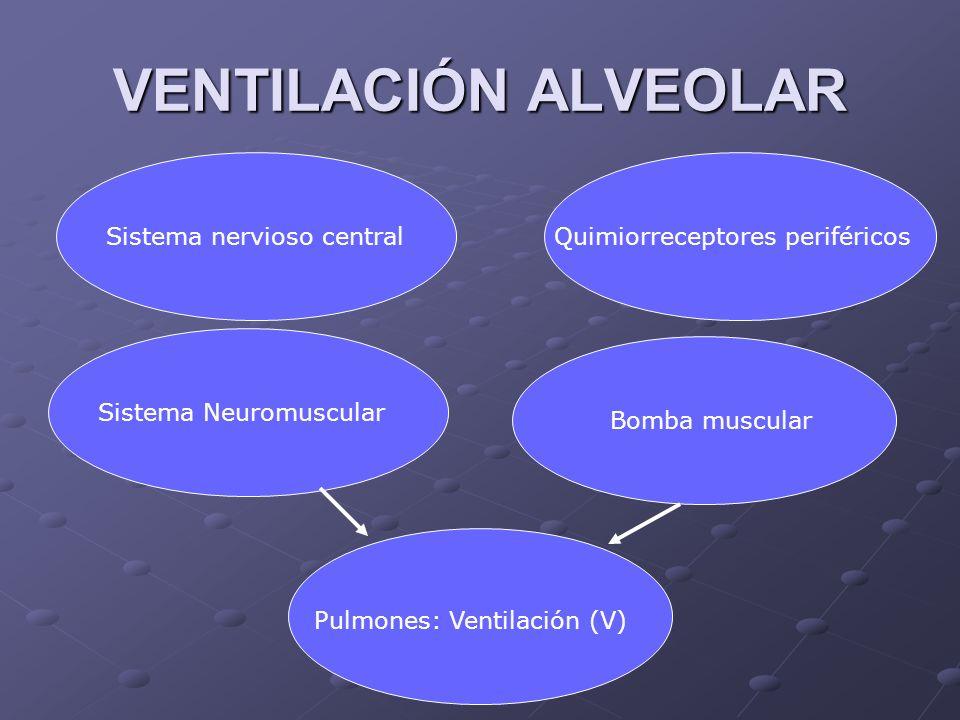 VENTILACIÓN ALVEOLAR Sistema nervioso central
