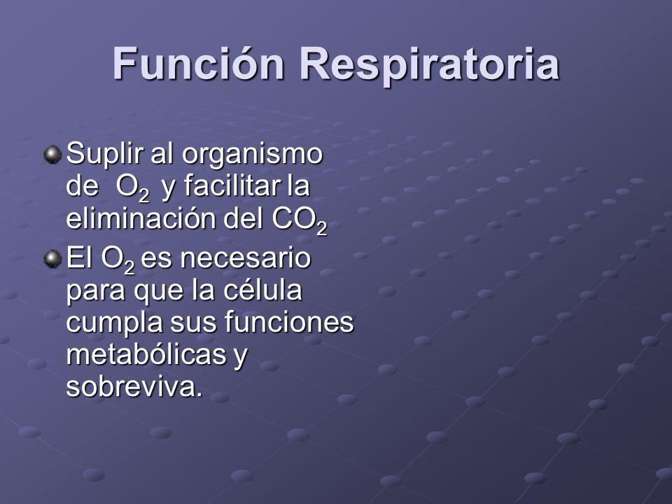 Función Respiratoria Suplir al organismo de O2 y facilitar la eliminación del CO2.