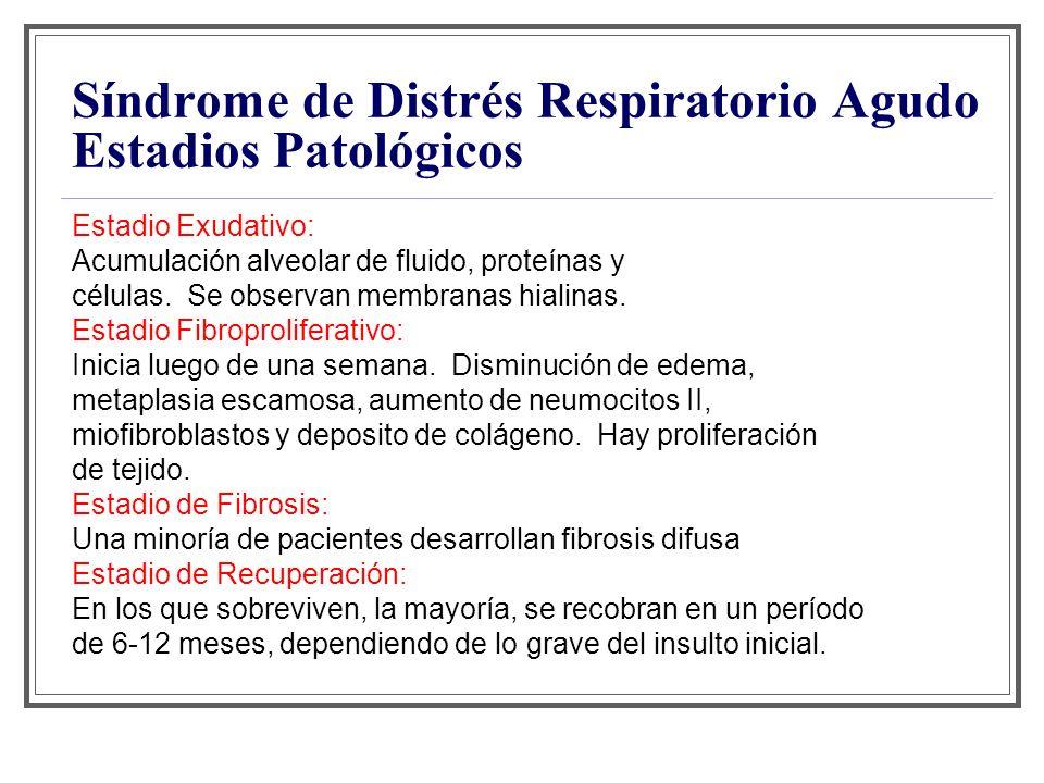 Síndrome de Distrés Respiratorio Agudo Estadios Patológicos