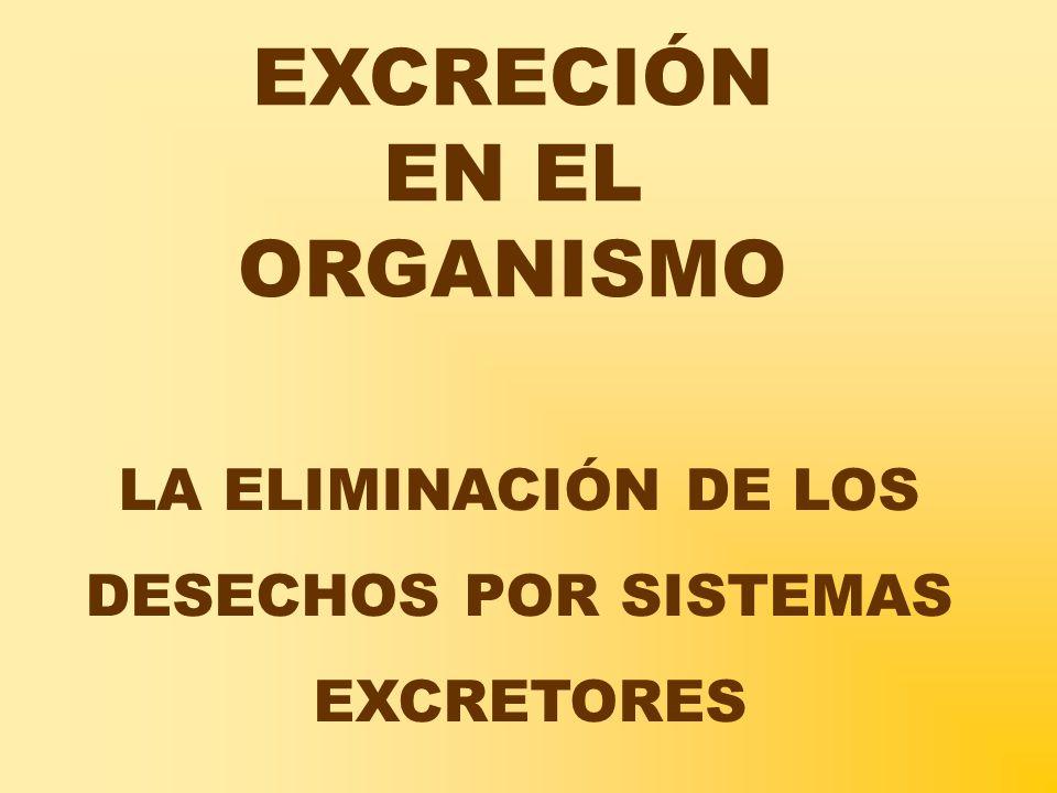 EXCRECIÓN EN EL ORGANISMO