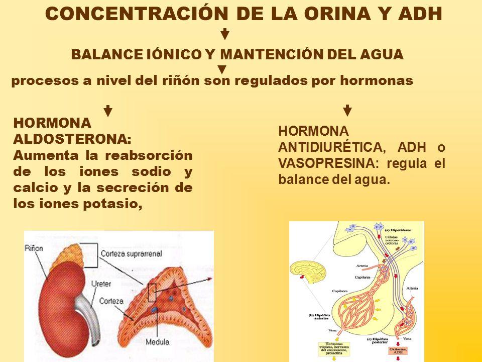 BALANCE IÓNICO Y MANTENCIÓN DEL AGUA