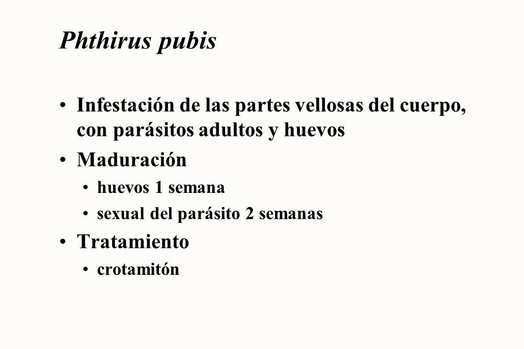 Phthirus pubis Infestación de las partes vellosas del cuerpo, con parásitos adultos y huevos. Maduración.