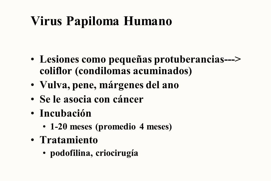 Virus Papiloma Humano Lesiones como pequeñas protuberancias---> coliflor (condilomas acuminados) Vulva, pene, márgenes del ano.