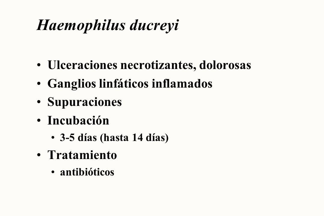 Haemophilus ducreyi Ulceraciones necrotizantes, dolorosas