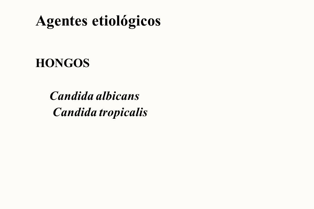 Agentes etiológicos HONGOS Candida albicans Candida tropicalis