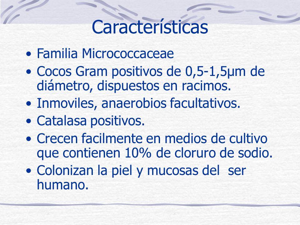 Características Familia Micrococcaceae