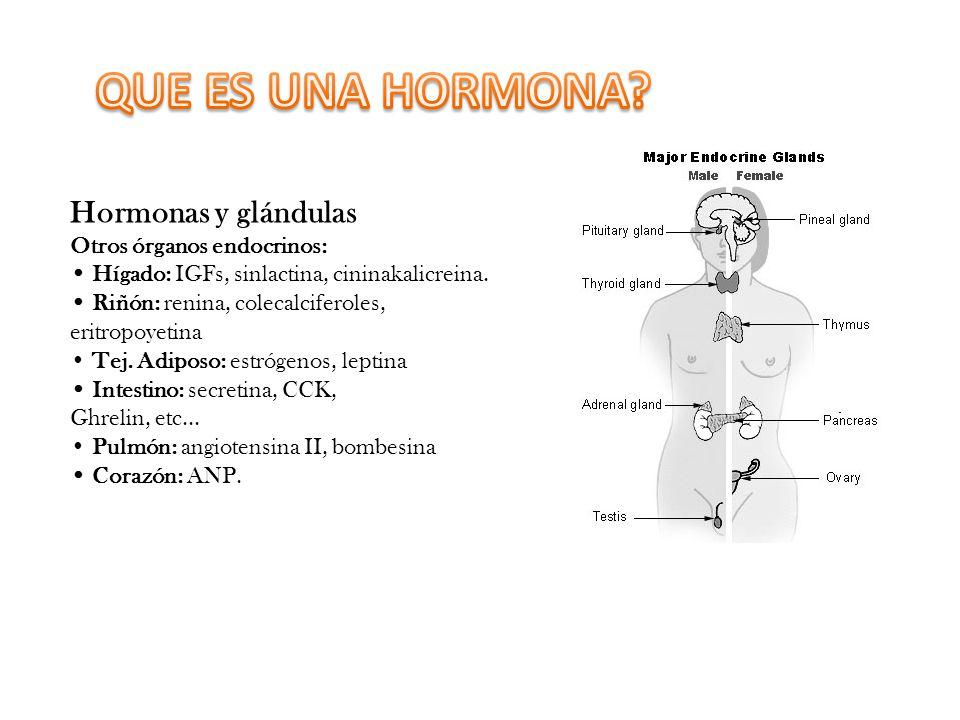 QUE ES UNA HORMONA Hormonas y glándulas Otros órganos endocrinos: