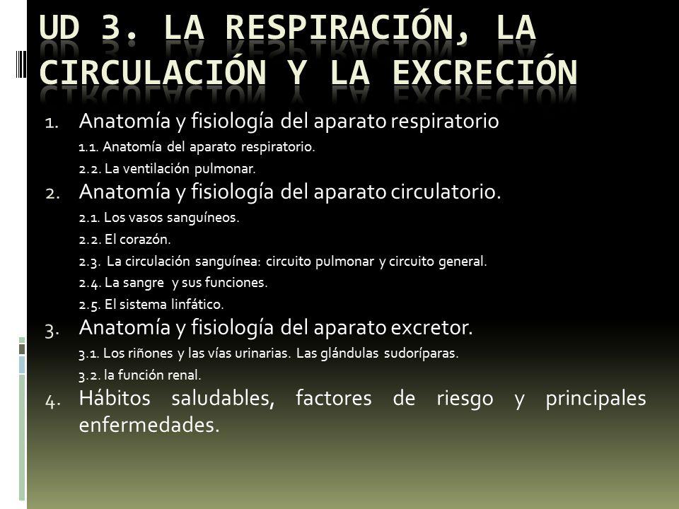 UD 3. LA RESPIRACIÓN, LA CIRCULACIÓN Y LA EXCRECIÓN