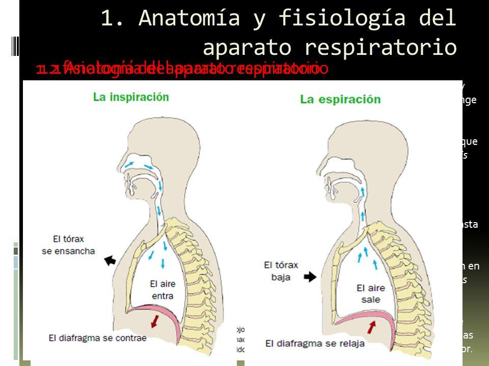 1. Anatomía y fisiología del aparato respiratorio