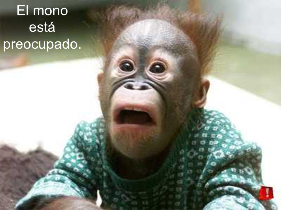 El mono está preocupado.