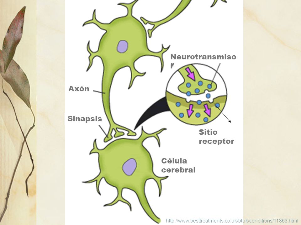 Neurotransmisor Neurotransmisor Axón Sinapsis Sitio receptor