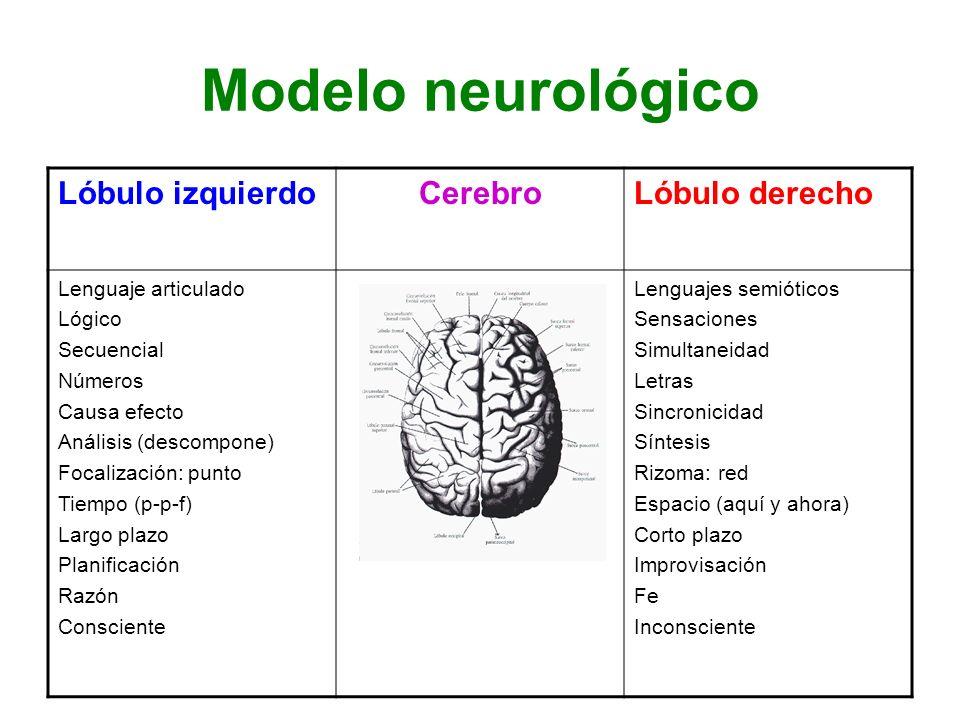 Modelo neurológico Lóbulo izquierdo Cerebro Lóbulo derecho