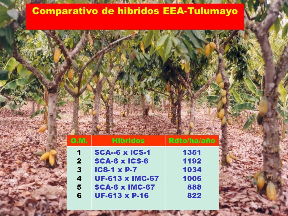 Comparativo de hibridos EEA-Tulumayo