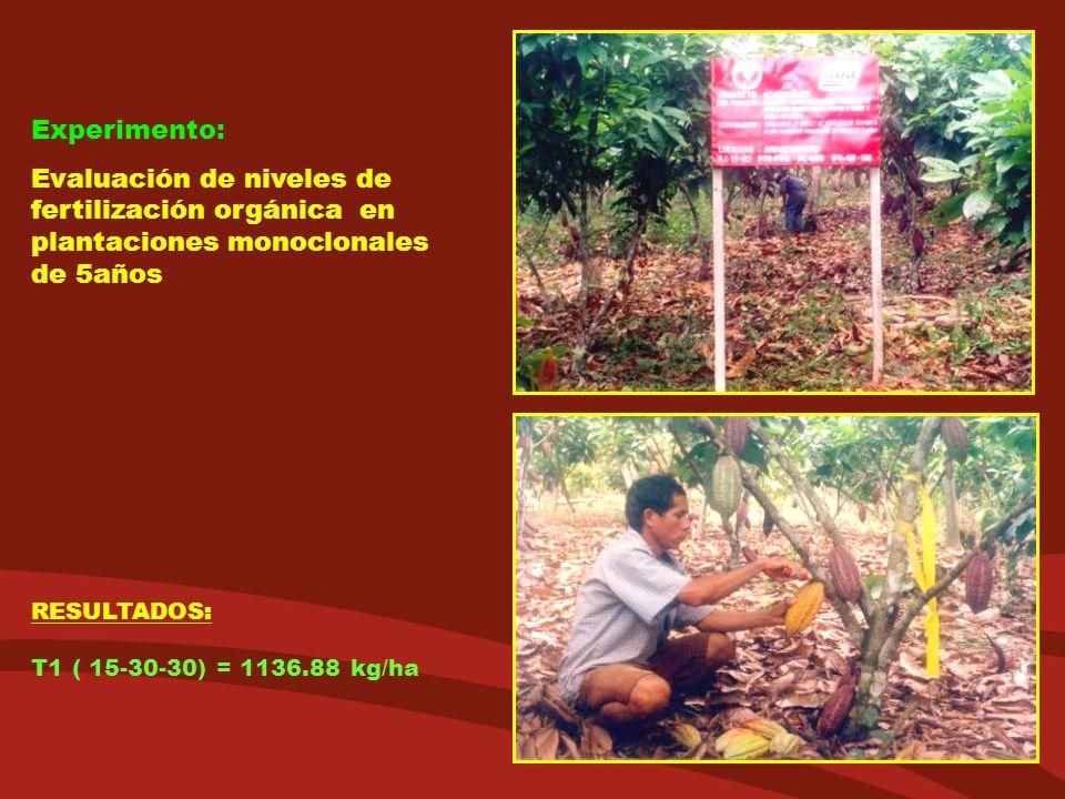 Experimento: Evaluación de niveles de fertilización orgánica en plantaciones monoclonales de 5años.