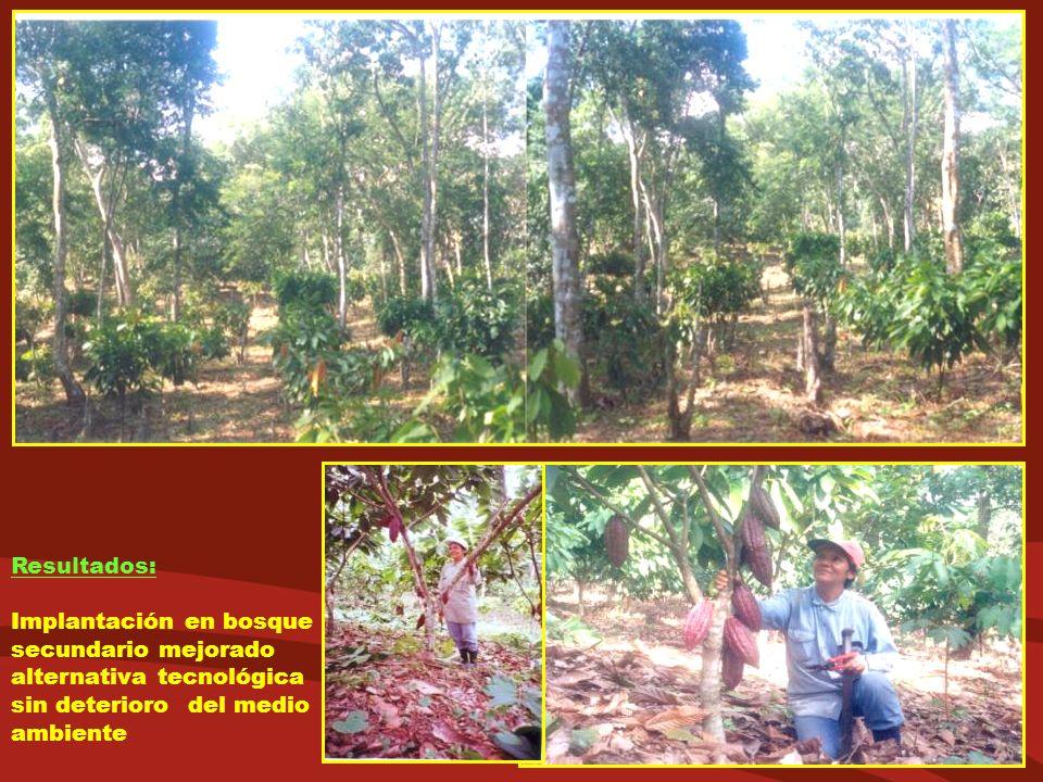 Resultados: Implantación en bosque secundario mejorado alternativa tecnológica sin deterioro del medio ambiente.
