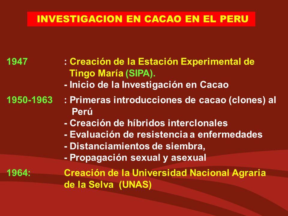 INVESTIGACION EN CACAO EN EL PERU