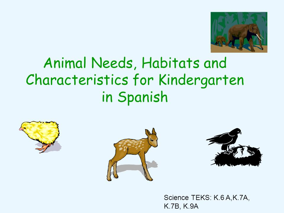 Animal Needs, Habitats and Characteristics for Kindergarten in Spanish