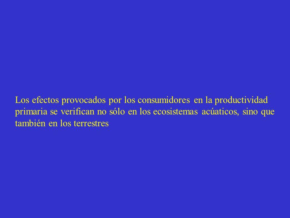 Los efectos provocados por los consumidores en la productividad