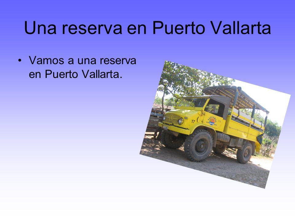 Una reserva en Puerto Vallarta