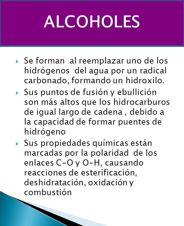 ALCOHOLES Se forman al reemplazar uno de los hidrógenos del agua por un radical carbonado, formando un hidroxilo.