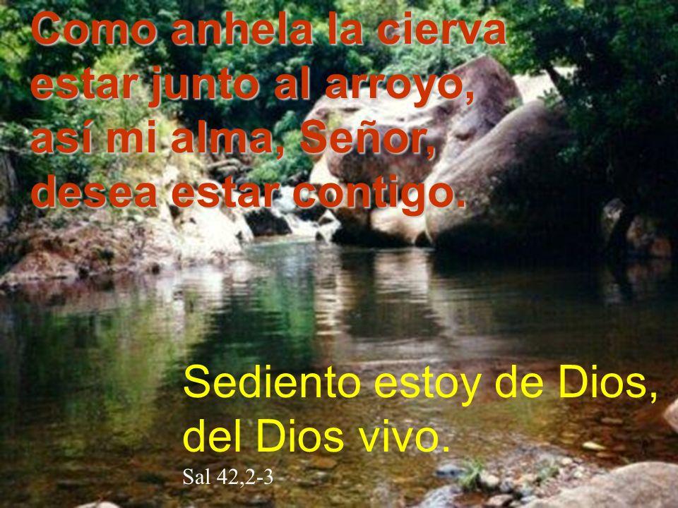 Como anhela la cierva estar junto al arroyo, así mi alma, Señor,