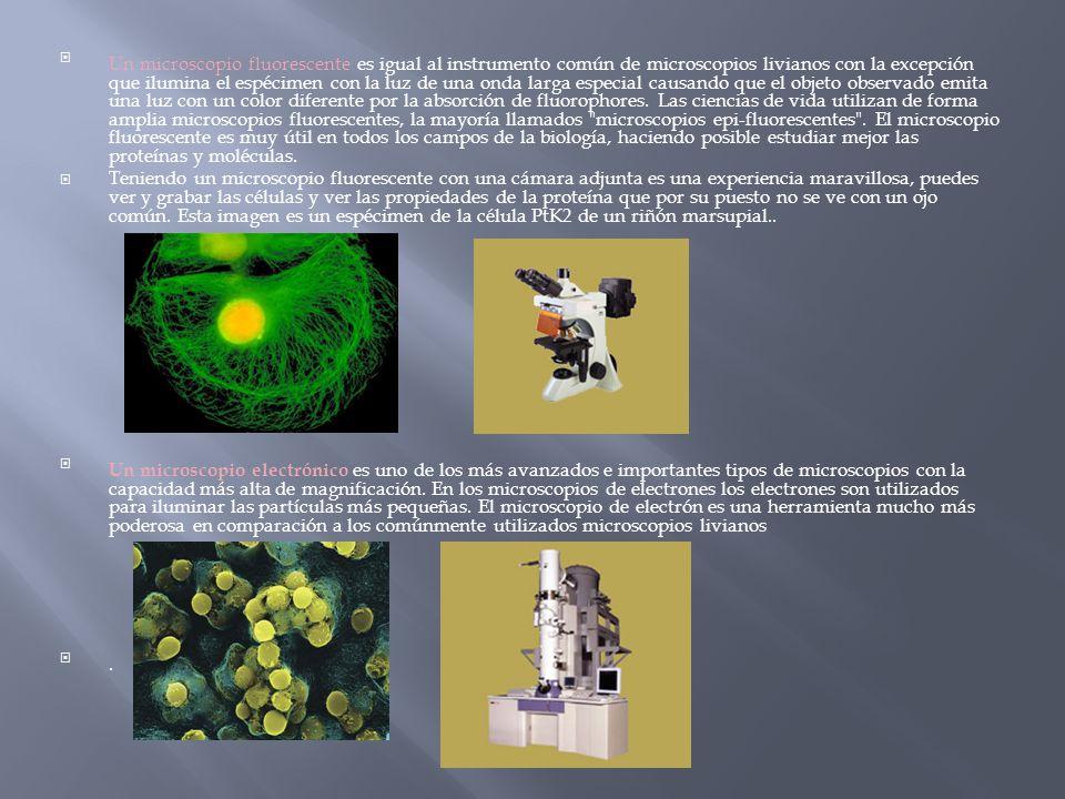 El microscopio jorge eduardo jim nez bernal ppt descargar - Mejor luz para estudiar ...