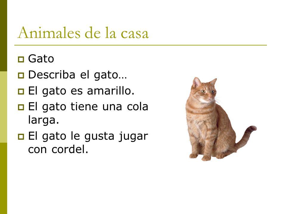 Animales y descripci n ppt video online descargar - El gato en casa ...