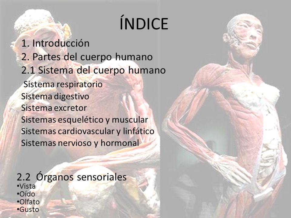 ÍNDICE 1. Introducción 2. Partes del cuerpo humano