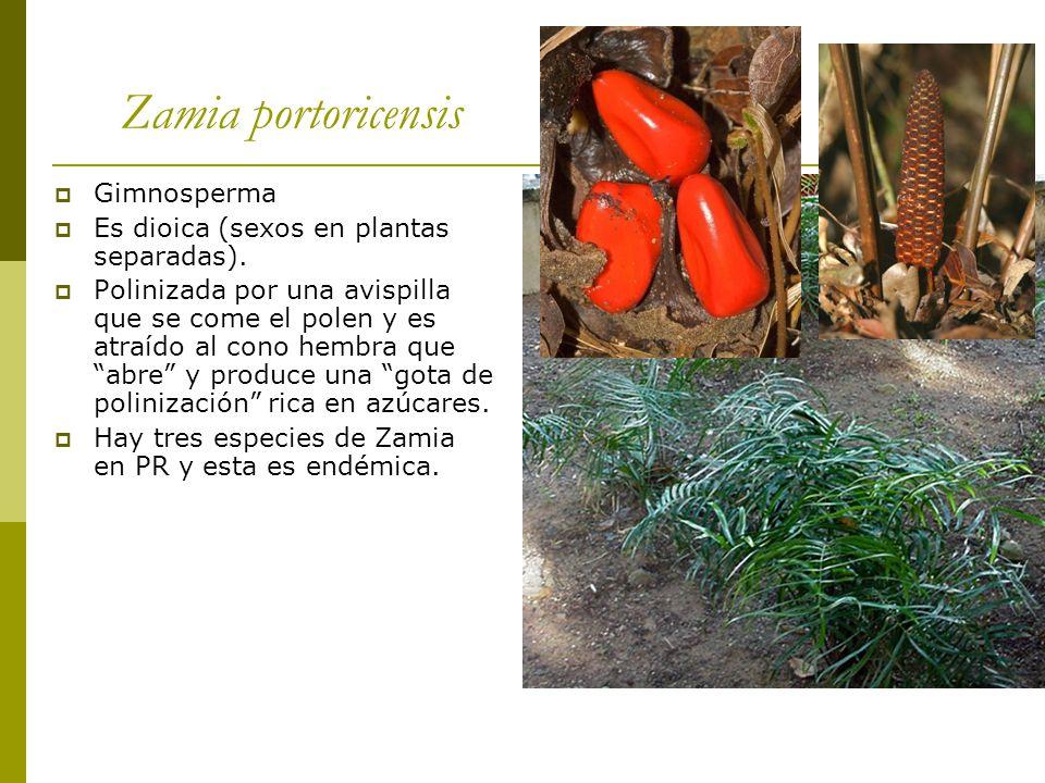 Herbario mapr un herbario es una colecci n de plantas o for Planta ornamental zamia