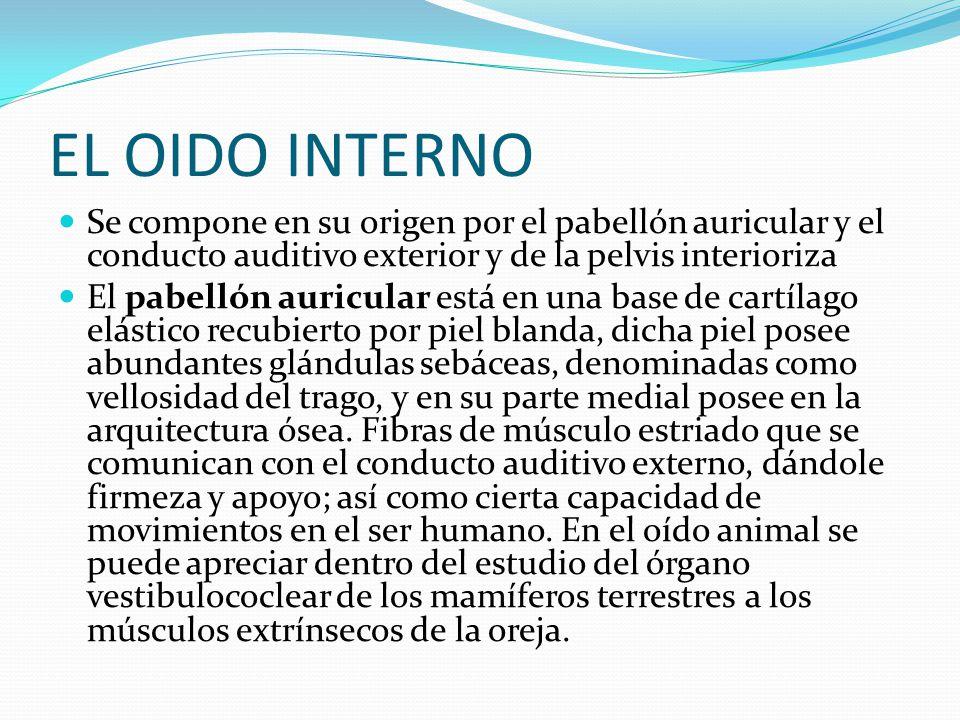 Cologio de bachilleres plantel numero 13 xochimilco for Significado de exterior