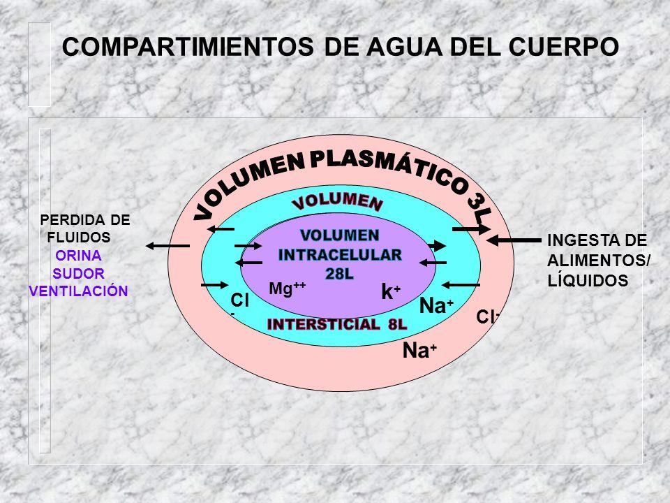 COMPARTIMIENTOS DE AGUA DEL CUERPO